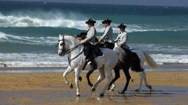 'Cómo bailan los caballos andaluces' en Fundación Real Escuela Andaluza del Arte Ecuestre