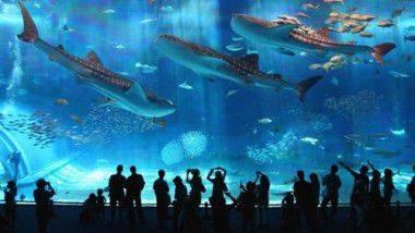 Explora el L'Aquàrium de Barcelona