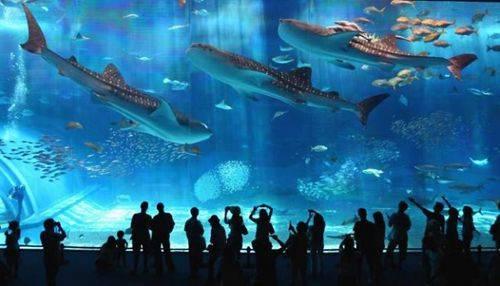 Entradas l aquarium de barcelona for Aquarium de barcelona