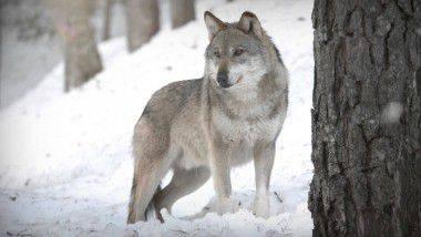 Parques naturales: protección de especies y medio ambiente