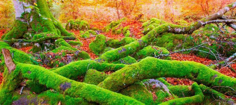 Escapa de la rutina: Descubre los 7 mejores planes para el otoño