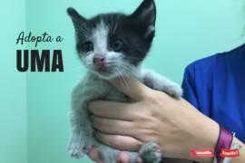 Taquilla Cero: Adopta a Uma