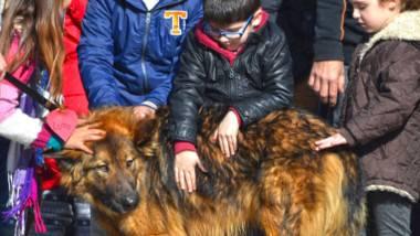 Bioparc Valencia busca familias para perros abandonados