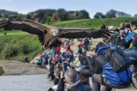 Espectáculos y diversión en el Parque de Cabárceno: horarios del 2018