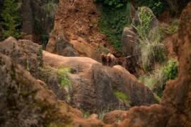 Todo preparado: El Parque de Cabárceno reabre sus puertas