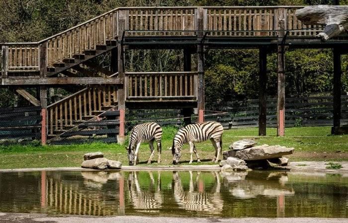 El reto doble de zoos y acuarios: atender a los animales y soportar el esfuerzo económico