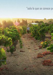 Cartel de la película El vino, el mundo y nosotros