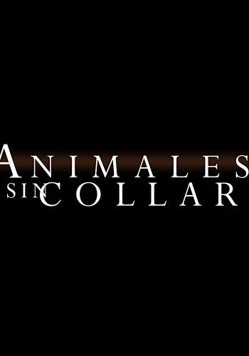 Animales sin collar background