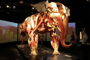 Body Worlds Animal Inside Out 2