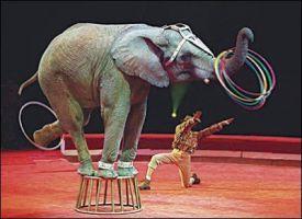 Gran Circo Alaska 4