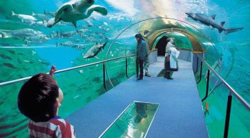 Aquarium Donostia-San Sebastián 1