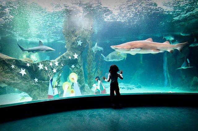 Entradas zoo aquarium de madrid for Precio entrada aquarium