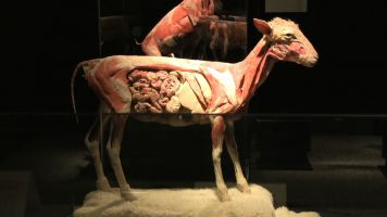 Body Worlds Animal Inside Out 3