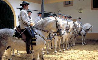 Cómo bailan los caballos andaluces 3