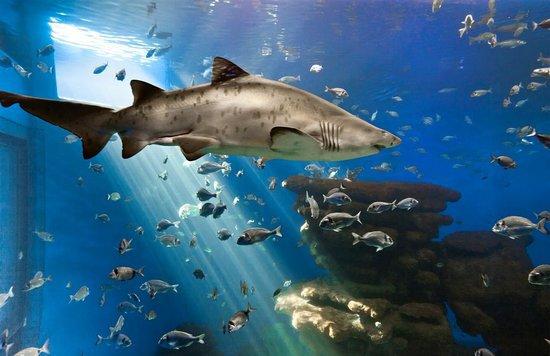 Entradas palma aquarium for Precio entrada aquarium
