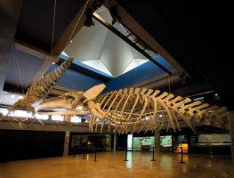 Museo Marítimo del Cantábrico 2
