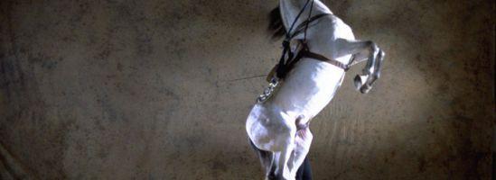 Cómo bailan los caballos andaluces 4