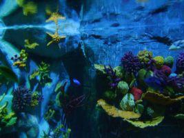 Sea Life Benalmadena 2